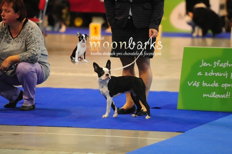Prague Expo Dog Double CACIB 30.10.2016 fotky